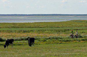Radfahren auf der Nordseeinsel Foehr